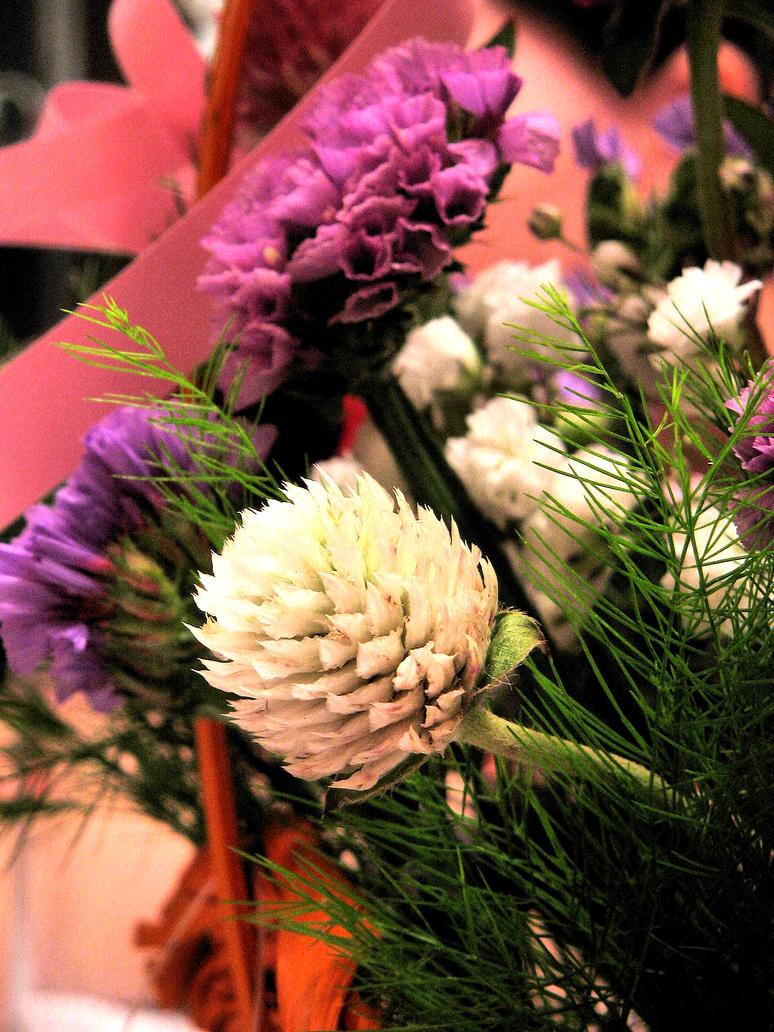 Flowerbud by pisy