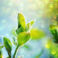 Spring Burst by EliseEnchanted