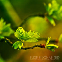 Joy by EliseEnchanted