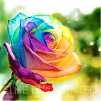 Over the rainbow by EliseEnchanted