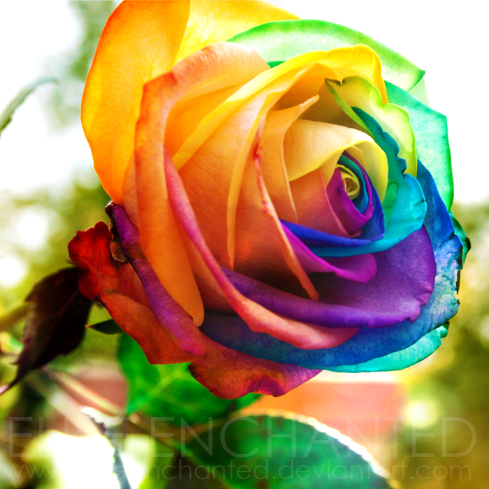 Colour Explosion By EliseEnchanted On DeviantArt