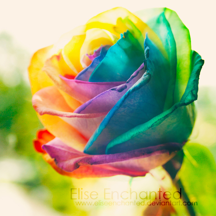 Nature 39 s wonders by eliseenchanted on deviantart for Multi colored rose petals