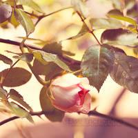Fairytale by EliseEnchanted