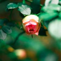 Romantic by EliseEnchanted