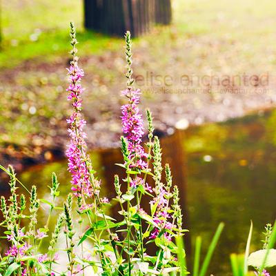 Bloom by EliseEnchanted