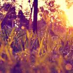 Magical sunrise