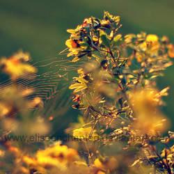 Golden light by EliseEnchanted