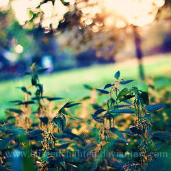 Morning light by EliseEnchanted