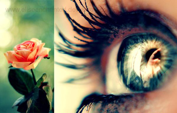 like a rose by eliseenchanted d4cajya - G�l & Papatya Avatarlar�