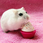 The cupcake is mine