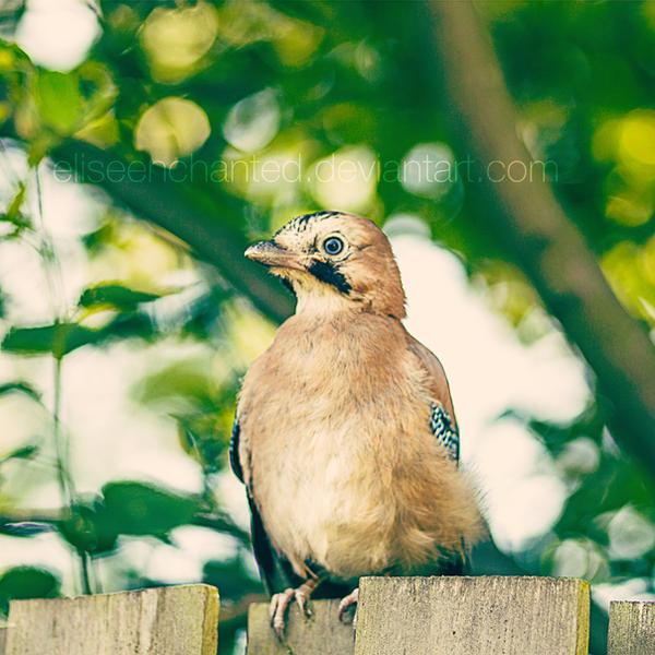 Little Bird update by EliseEnchanted
