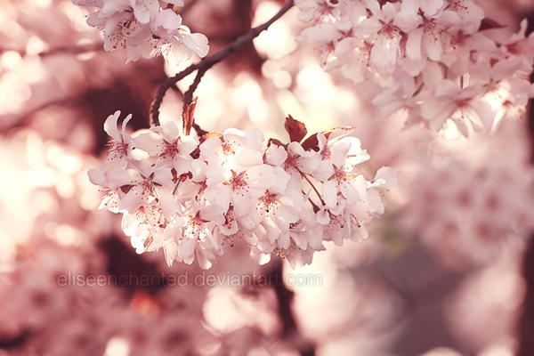 Spring memories by EliseEnchanted