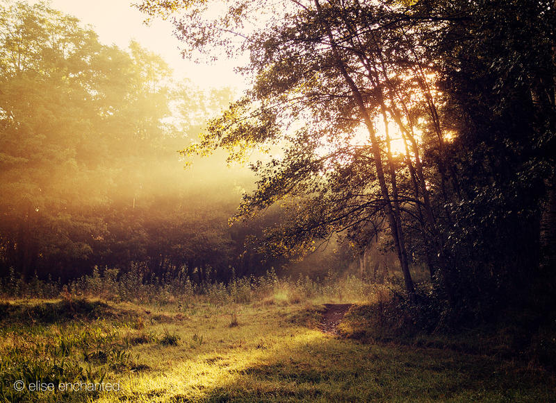 Autumn light by EliseEnchanted