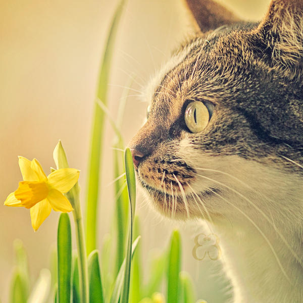 Day 36 - Flower sniffer by EliseEnchanted