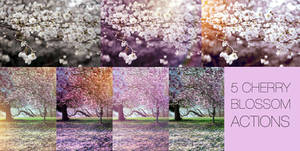 Cherry blossom actions