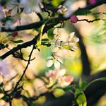 Sun by EliseEnchanted