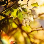 Shine by EliseEnchanted