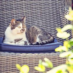 Meow by EliseEnchanted