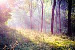 Summer morning by EliseEnchanted