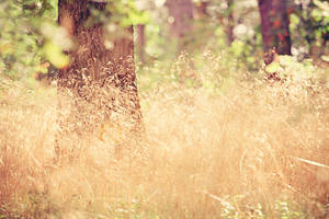 Summer blur by EliseEnchanted