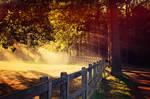 Light by EliseEnchanted