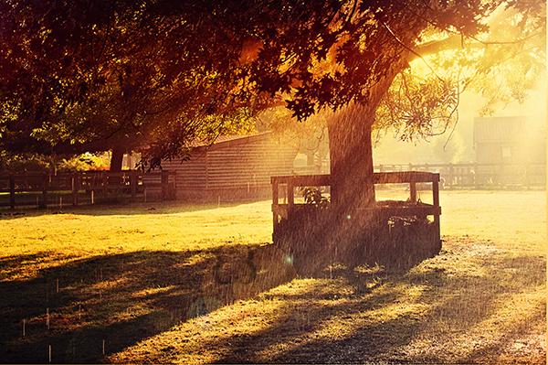Sunlit by EliseEnchanted