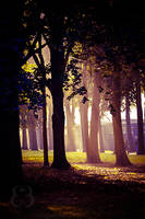Magical light by EliseEnchanted
