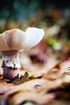Autumn bokeh by EliseEnchanted