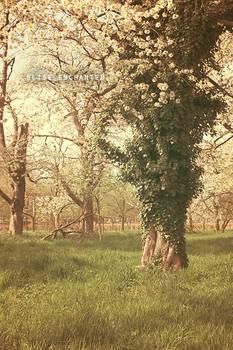 Forgotten spring