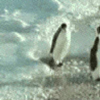Penguin Bullying by this-is-the-life2905