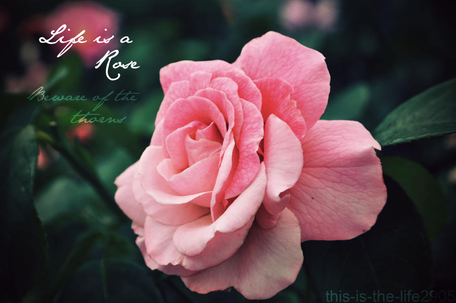 Life is a Rose by this-is-the-life2905