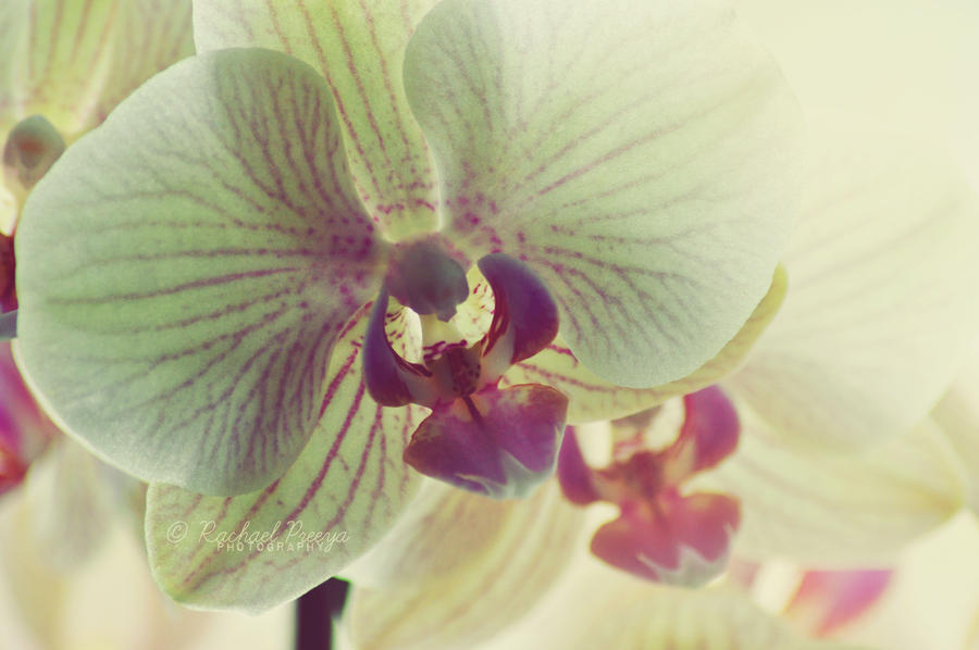 orchids. by this-is-the-life2905