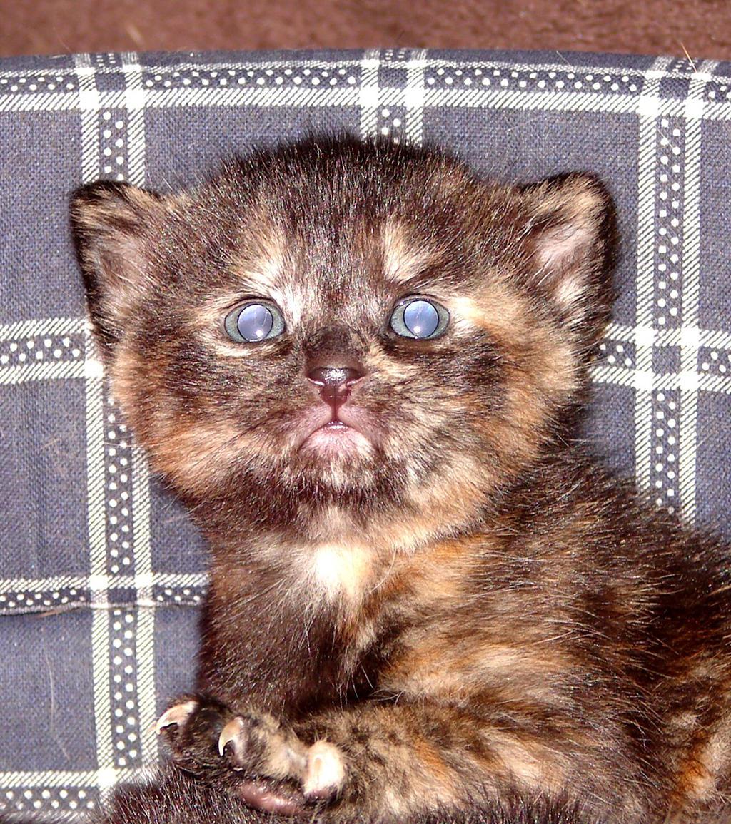 My Kitten Isn T Getting Rid Of Cat Flu Help