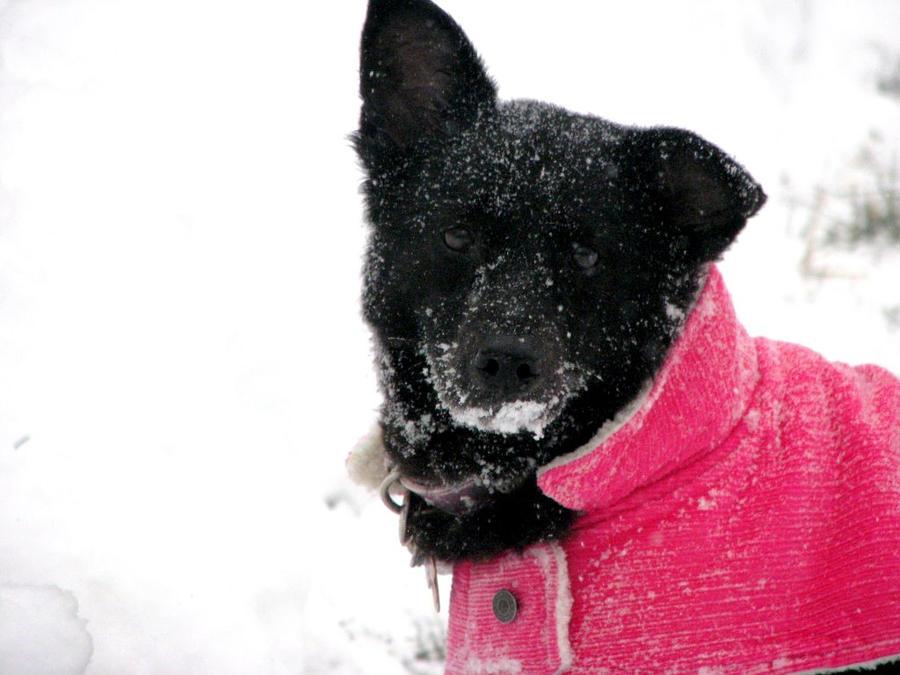 Snow Dog II