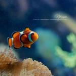 Nemo by JeanFan