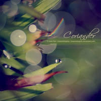 Coriander by JeanFan