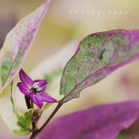 Flash of Purple by JeanFan