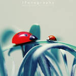Close Encounters of the Ladybug Kind
