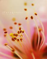 Pink by JeanFan
