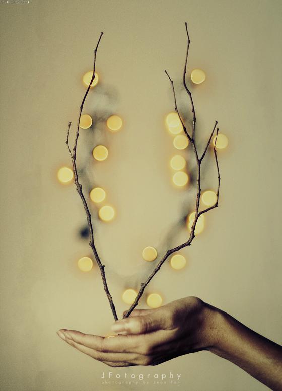 Bokeh Blossoms by JeanFan