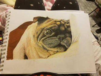 Paopao the pug by raquelravage