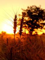 Toward the Sun by CastleBurh