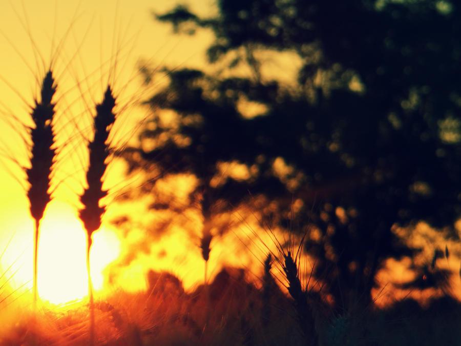 Summertime Sadness by CastleBurh