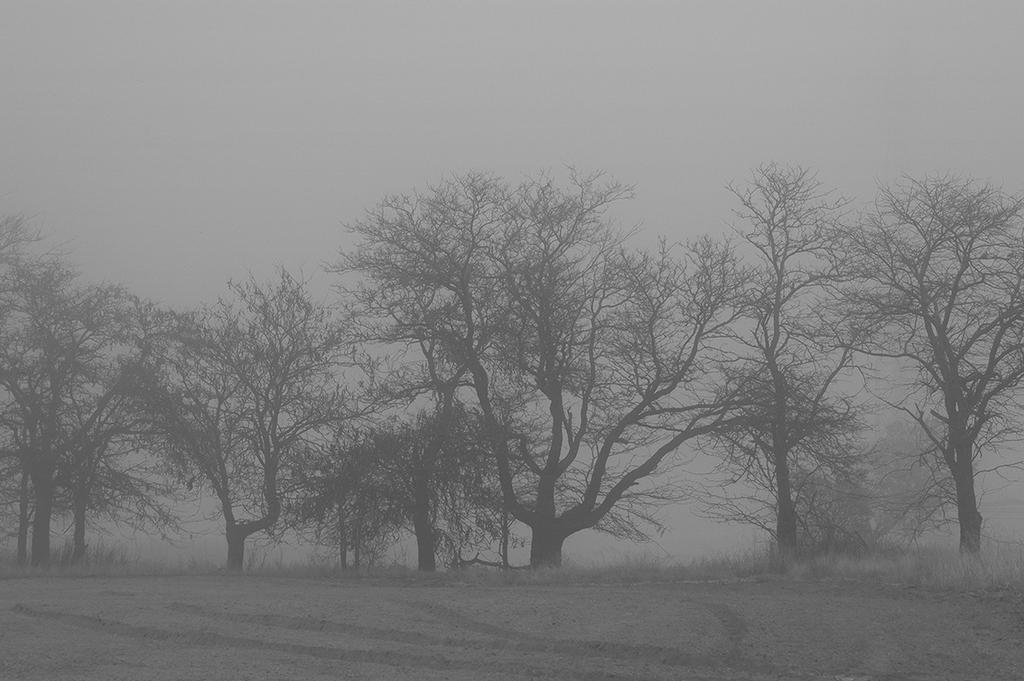 Misty Morning II by EstudiosIdeaSoez