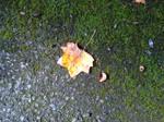 Golden leaf on moss by greyrowan