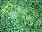 Oak leaves against green by greyrowan