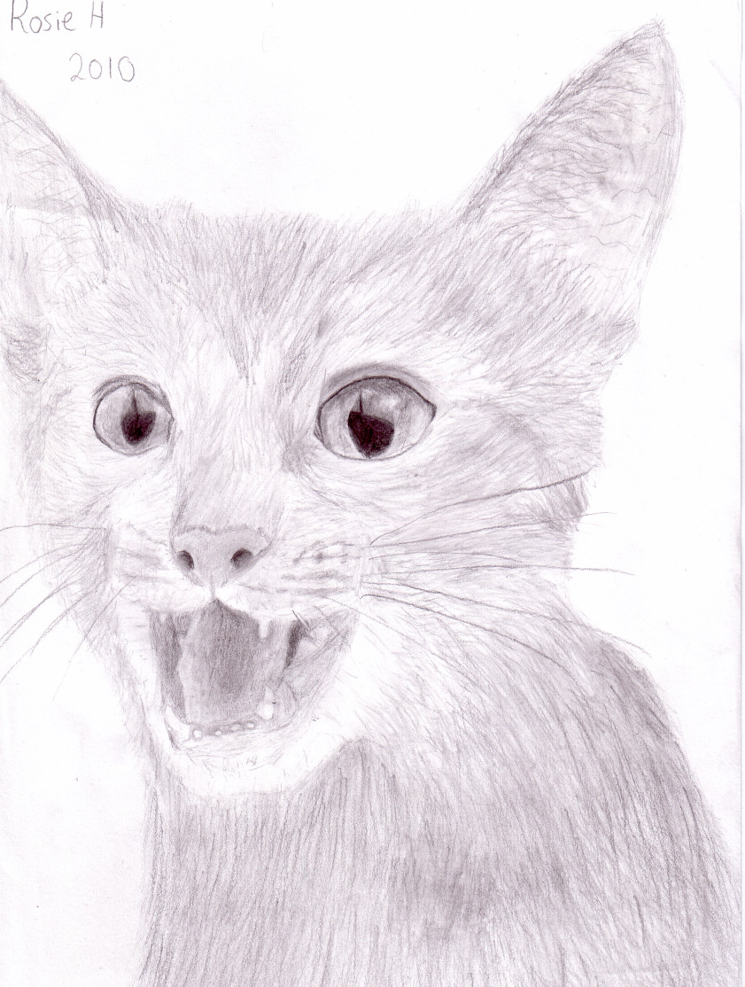 pencil cat drawing by leafpoolfanXD on deviantART