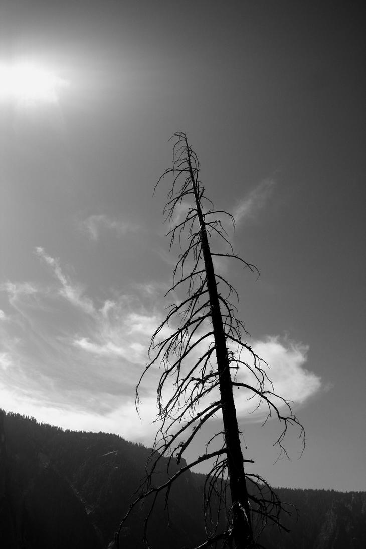 Lone Ranger by lwcldylan