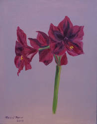 Hippeastrum by LuthienneTinuvielle