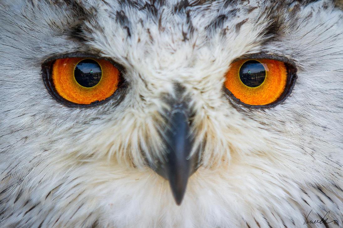 Western Siberian Eagle-Owl by vetchyKocour